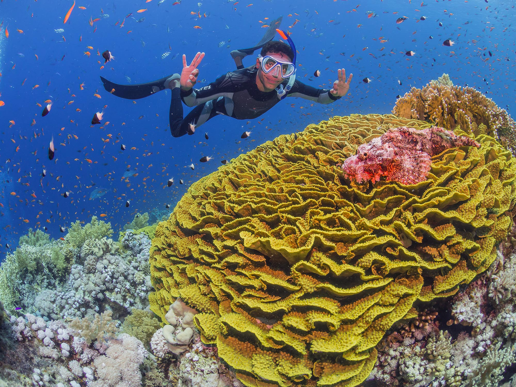 snorkeler posing next to yellow coral hread