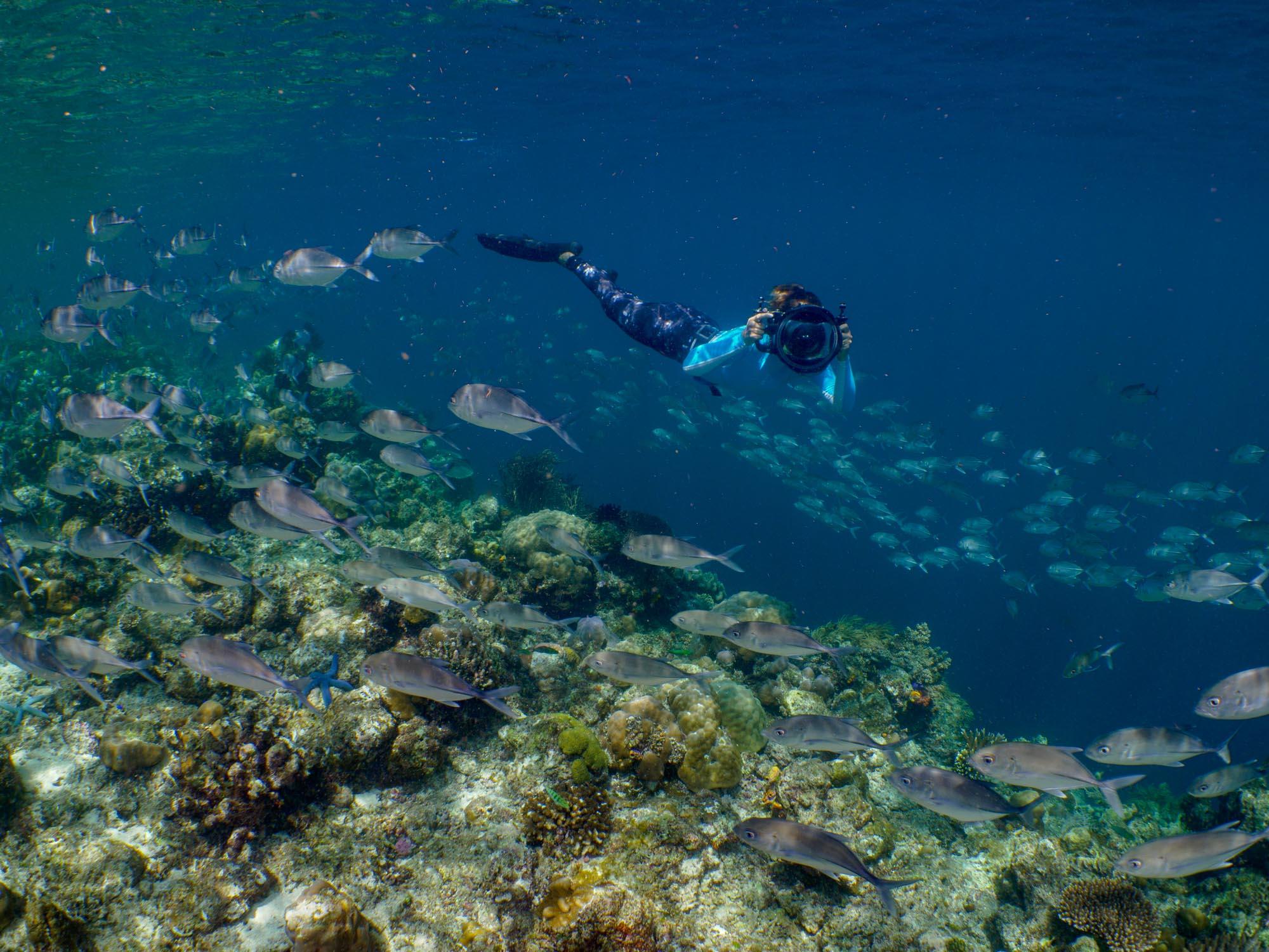 Snorkeler photographing schooling fish