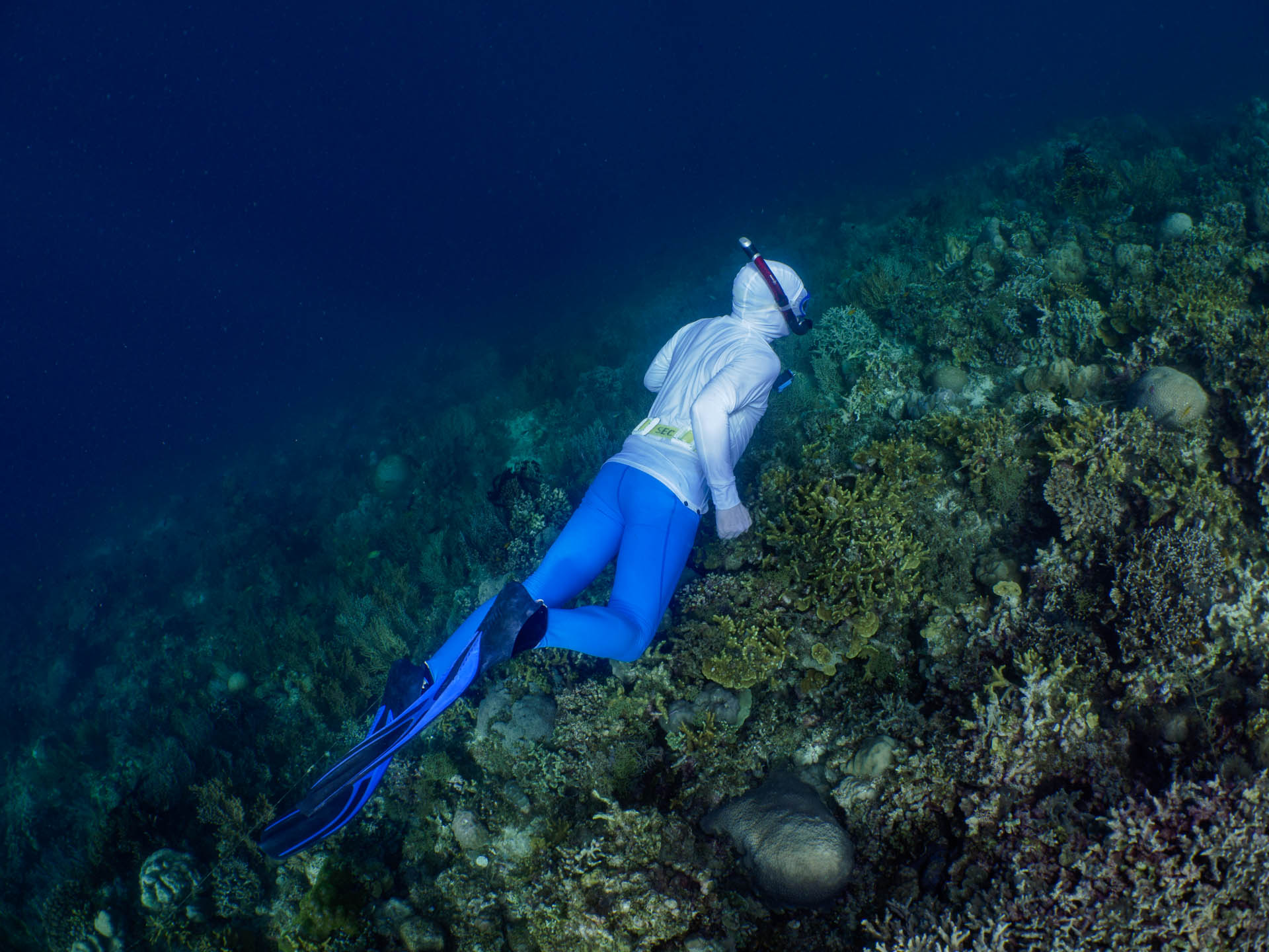 snorkeler in white shirt freediving over reef and blue water
