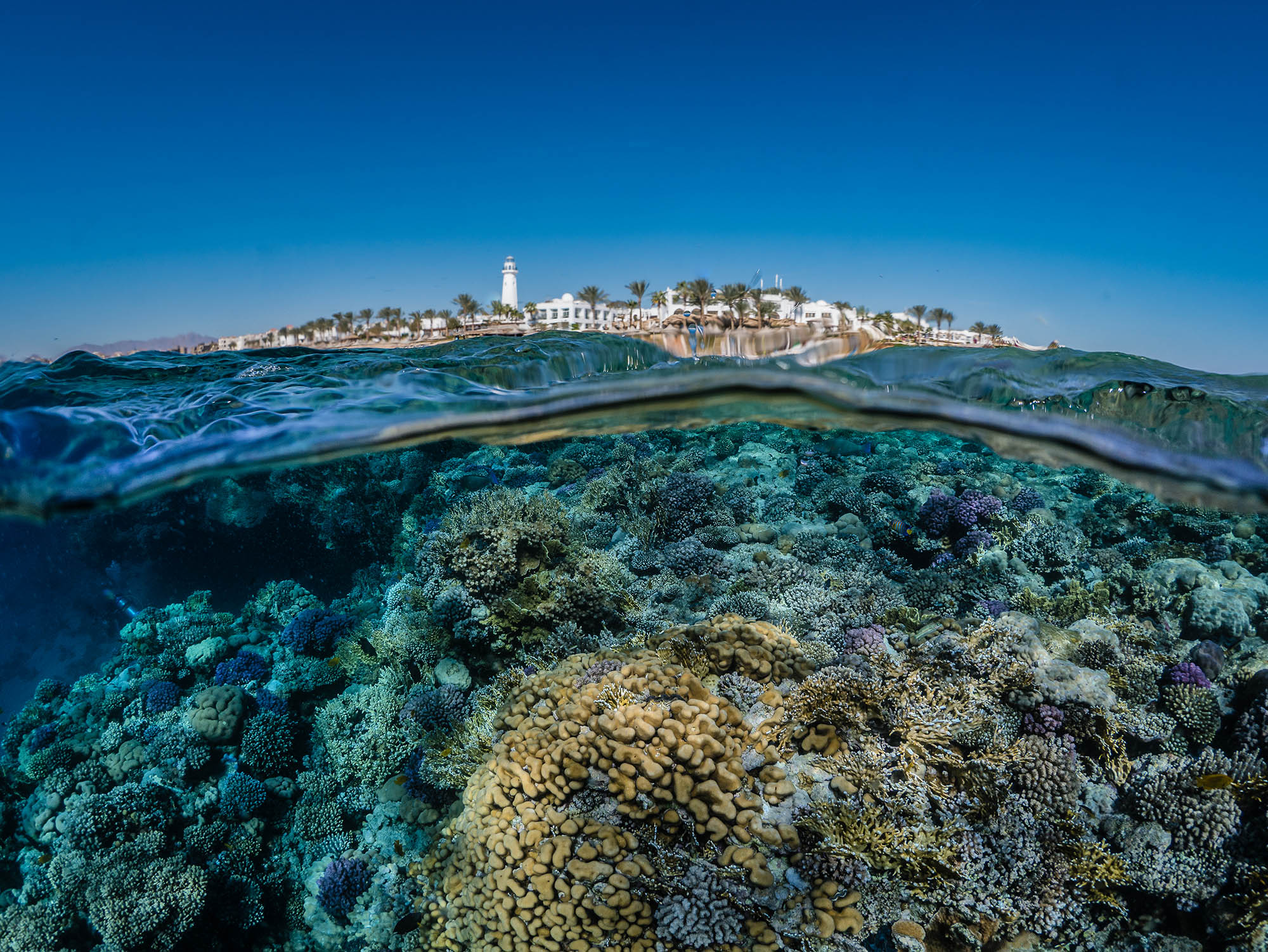 over under perspective with reef below and landscape above