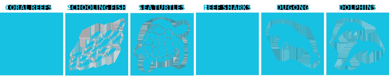 Egypt marine life guide