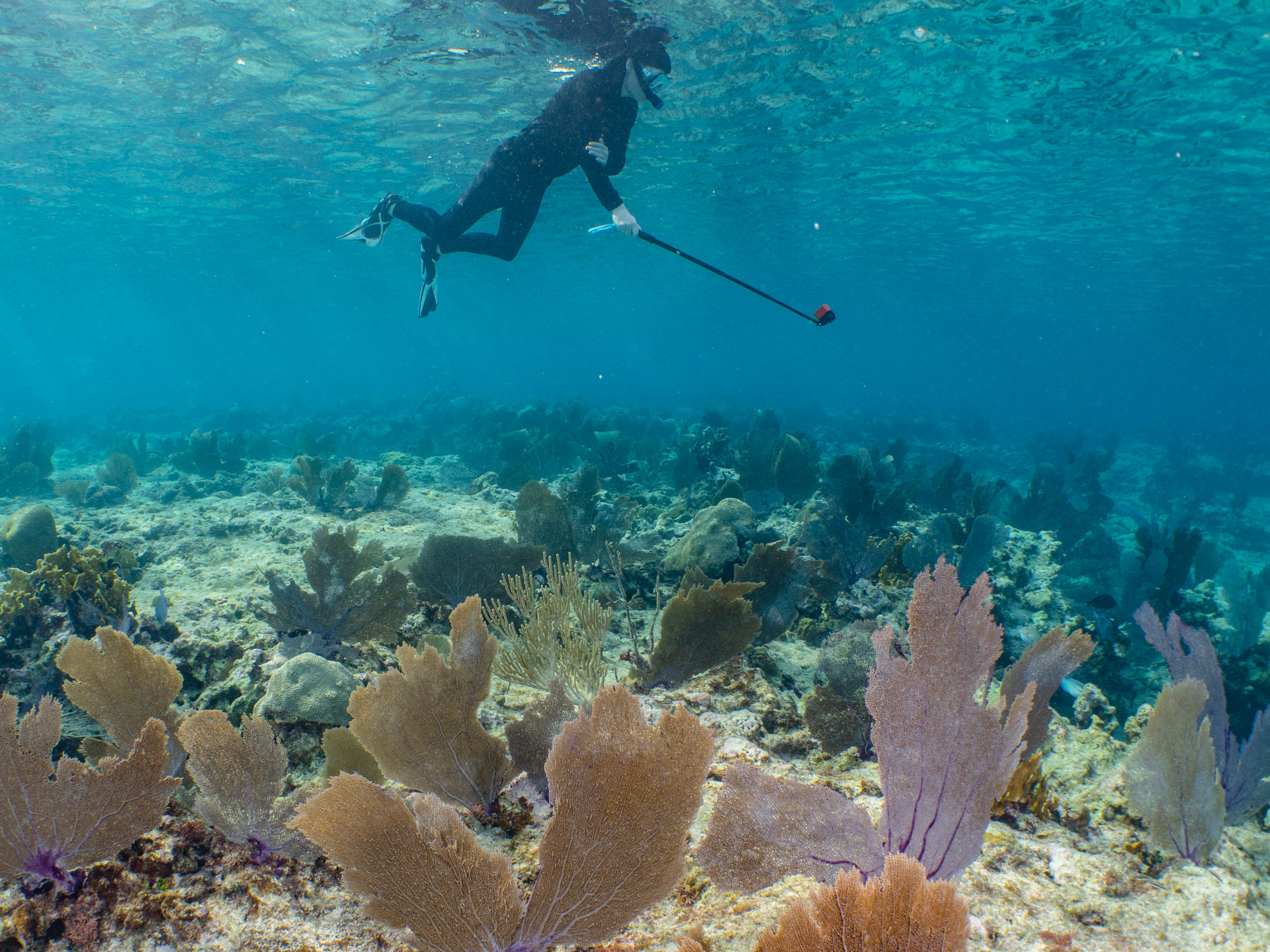 Snorkeler with GoPro