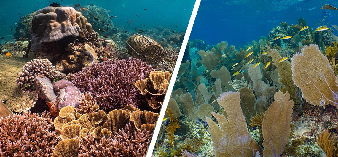 comparison of pacific reefs and Caribbean reefs
