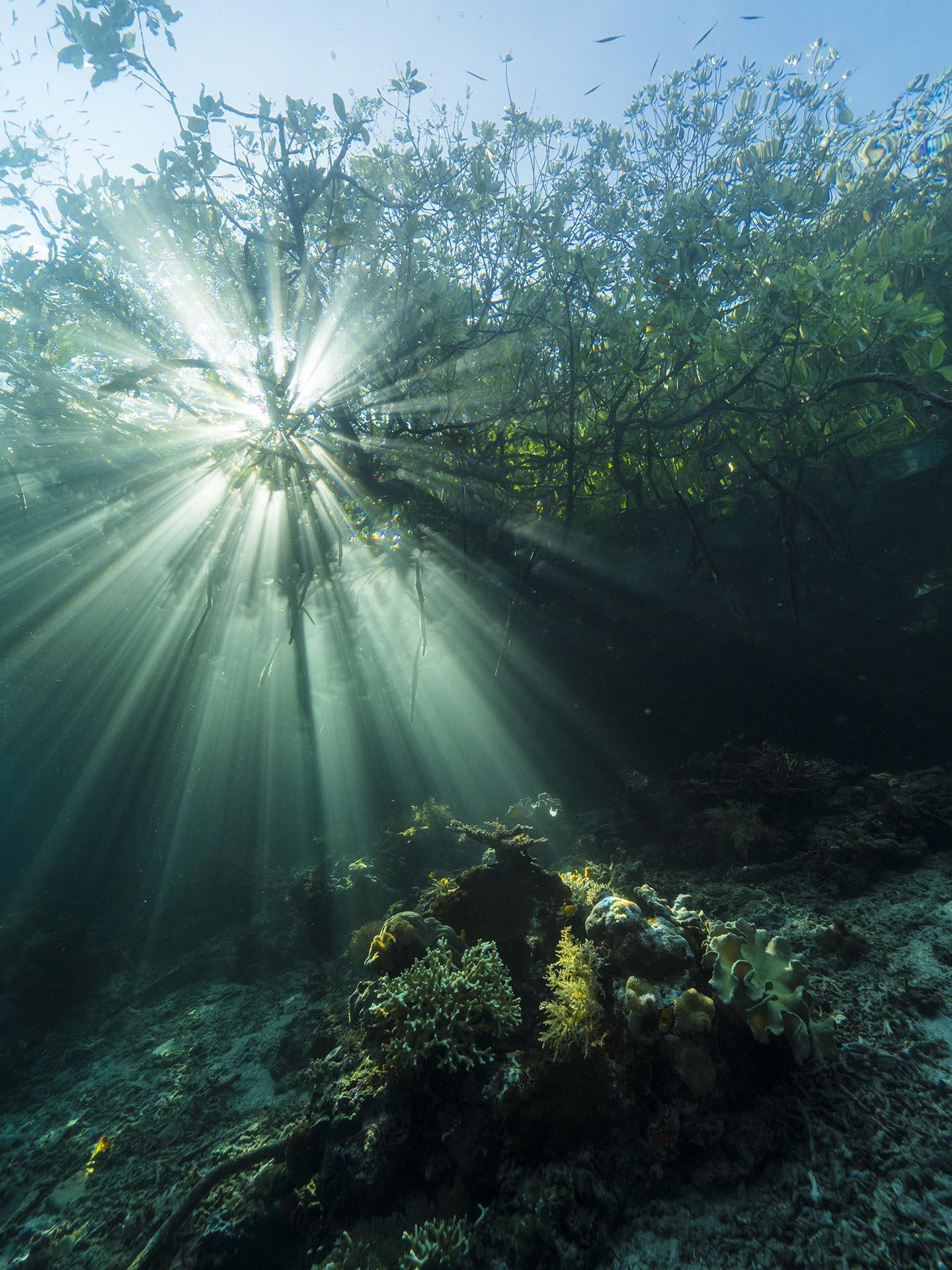 Sun rays in mangroves