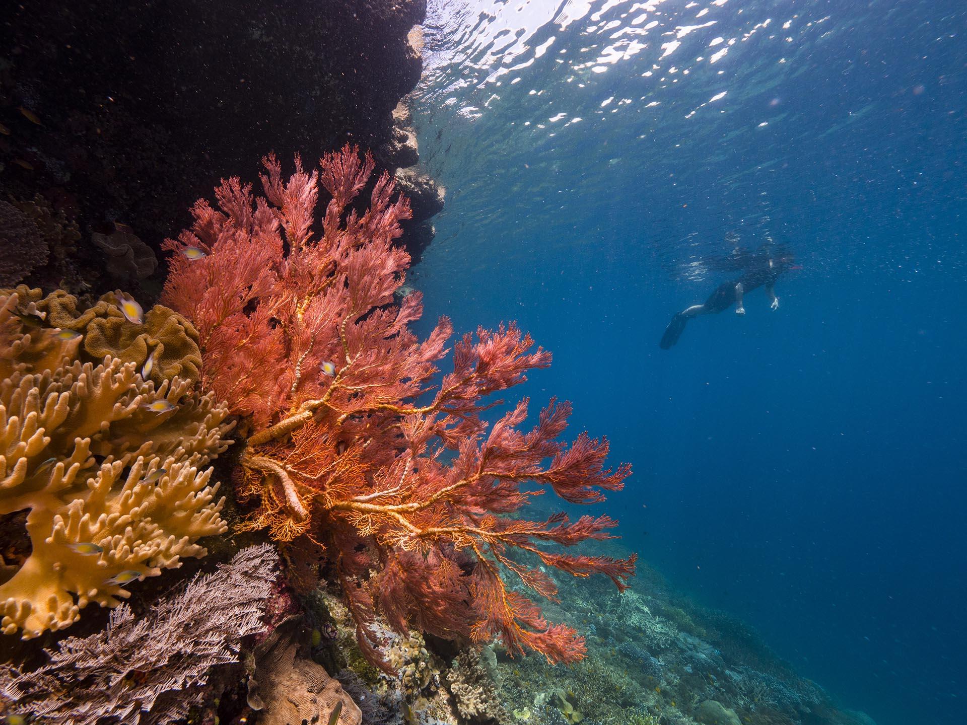 guest snorkeling in Raja Ampat