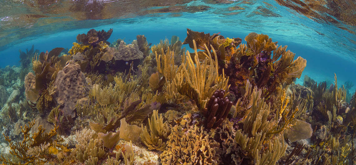 shallow Reef scene in Belize