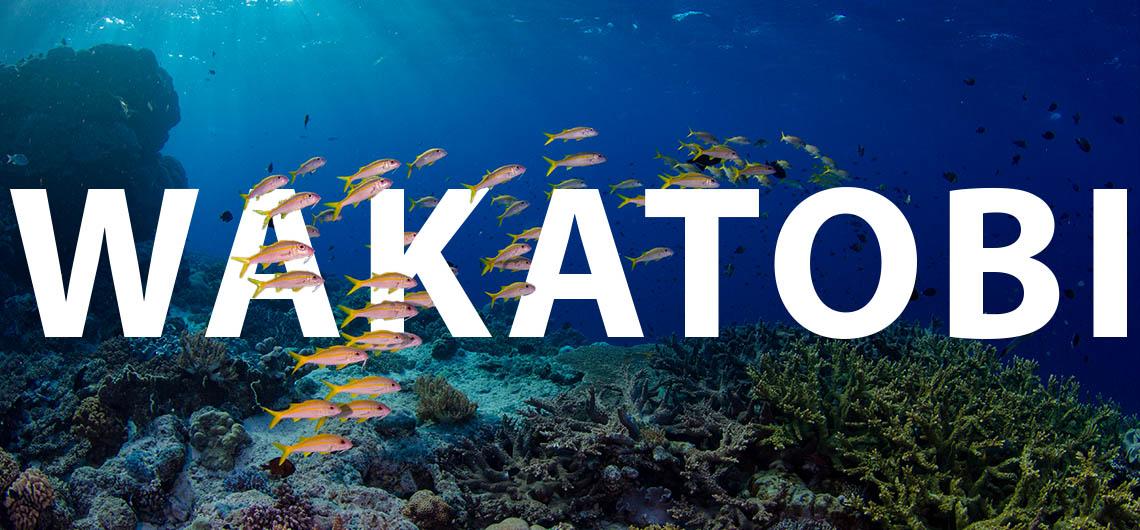 wakatobi reef and text